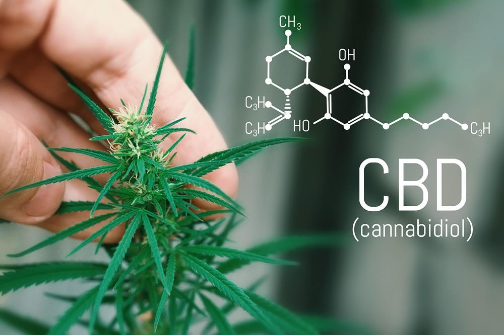 What is the Difference Between CBD and Hemp Oil?